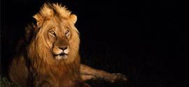 Scenic Kruger Park
